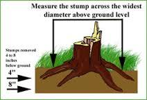 How stumps are measured.